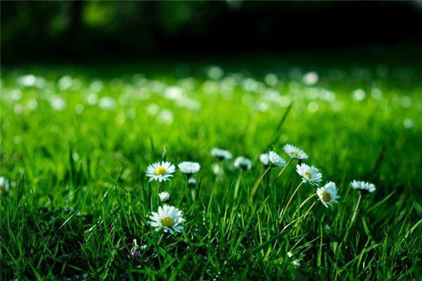 梦见草丛是什么意思