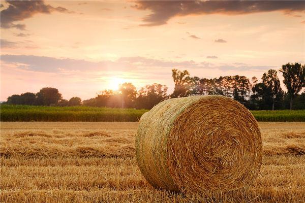 梦见稻草是什么意思