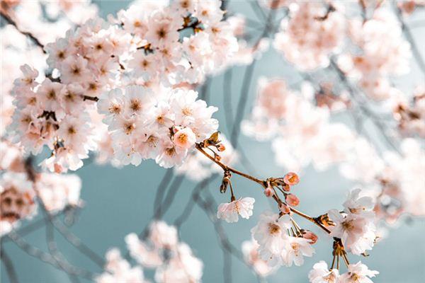 梦见梨花是什么意思