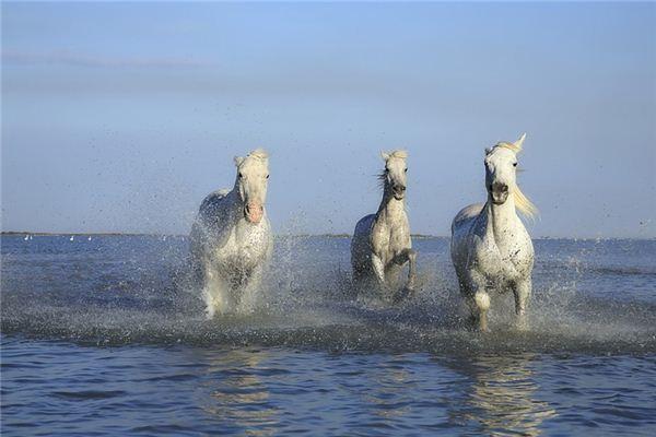 梦见白马是什么意思