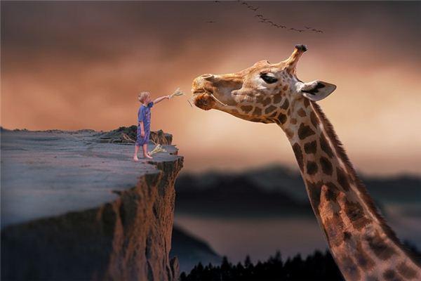 梦见长颈鹿是什么意思