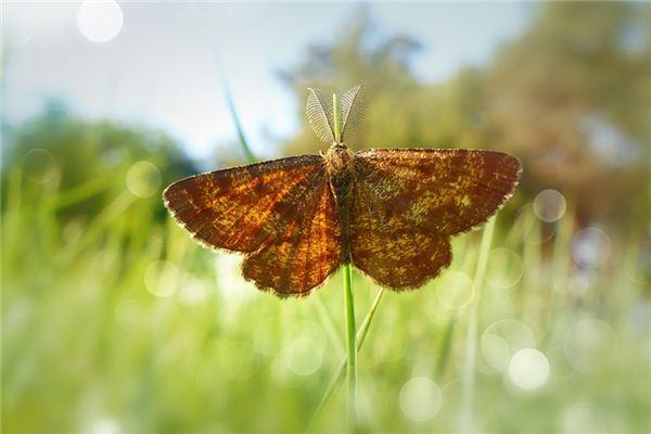 梦见飞蛾是什么意思