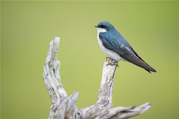 夢見飛禽是什么意思