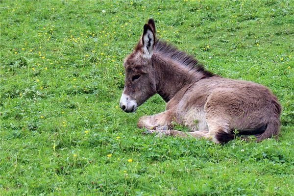 梦见驴是什么意思