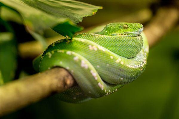 梦见绿蛇是什么意思