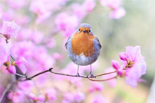 梦见鸟类是什么意思