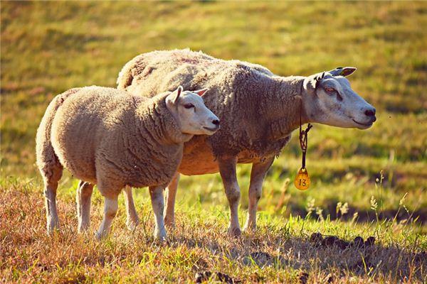 夢見牲畜是什么意思