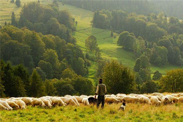 梦见牧羊人是什么意思
