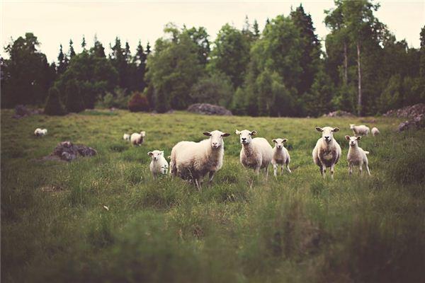 梦见农场是什么意思