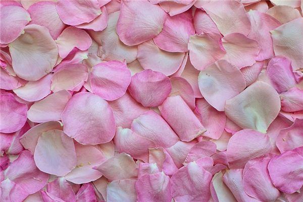 梦见花瓣是什么意思