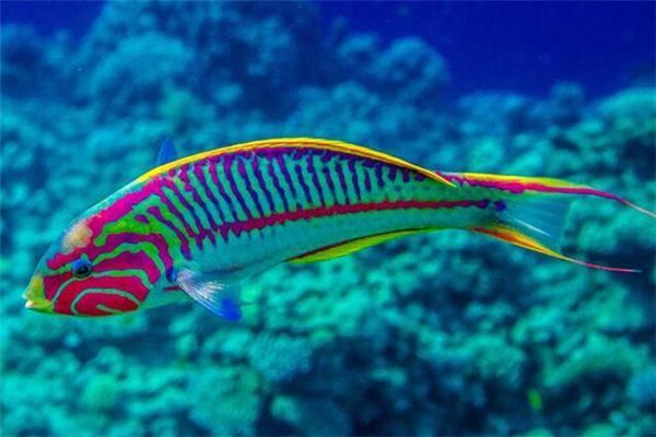 梦见五彩鱼是什么意思