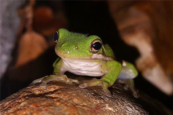 梦见蛙鸣是什么意思