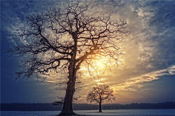 梦见树枝是什么意思