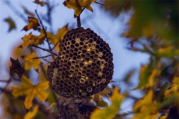 梦见蚂蜂窝是什么意思