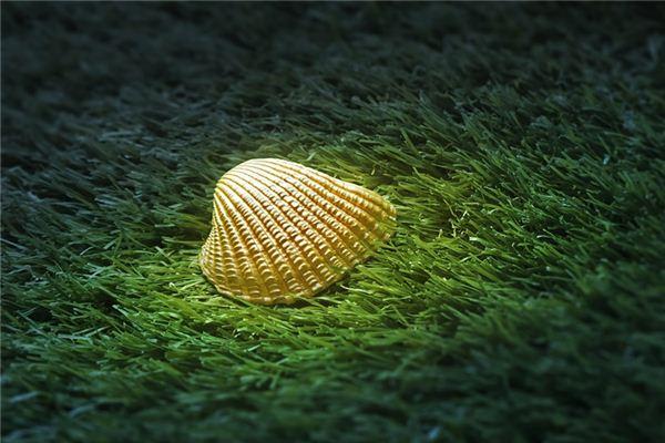 梦见牡蛎是什么意思