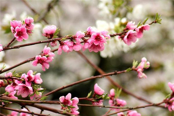 梦见桃木是什么意思