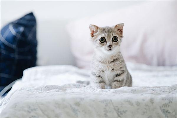 梦见被猫抓是什么意思