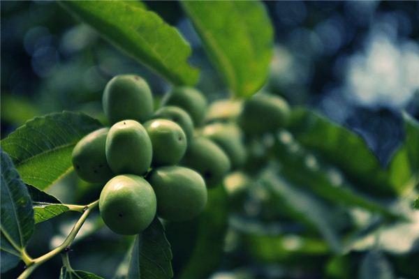 梦见种枣树是什么意思