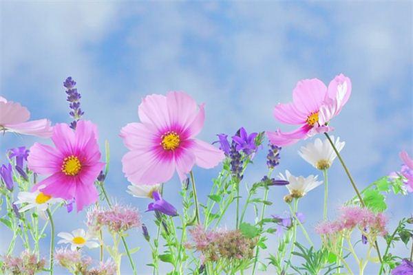 梦见采花是什么意思