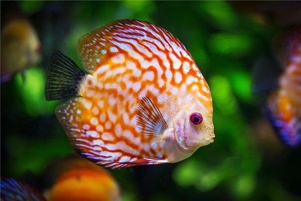 梦见被鱼咬是什么意思