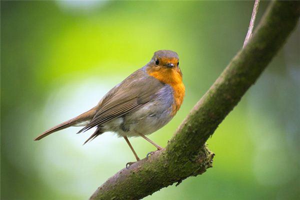 梦见被鸟啄是什么意思
