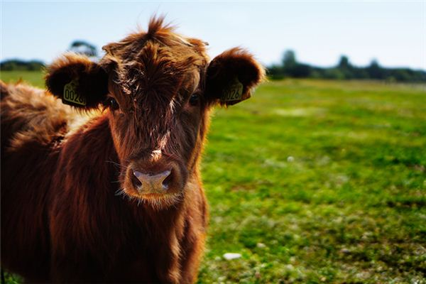 梦见牛说话是什么意思
