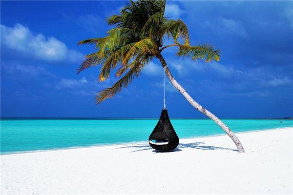 梦见棕榈树是什么意思