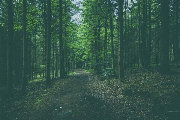 梦见树林是什么意思