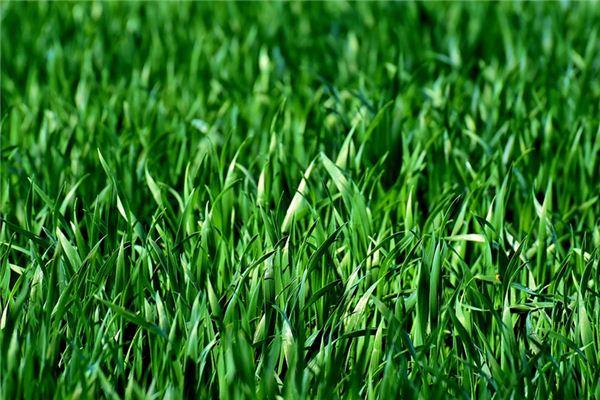 梦见拨草是什么意思