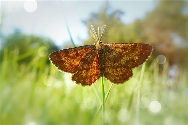 梦见灯蛾是什么意思