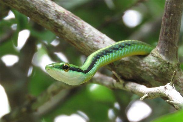 梦见青蛇是什么意思