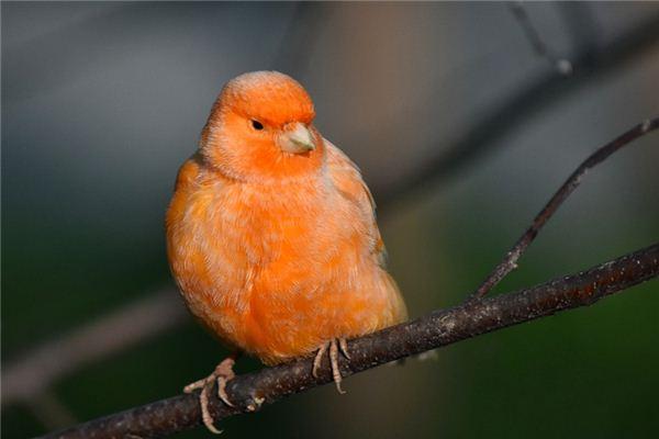 梦见金丝鸟是什么意思