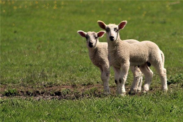 梦见放羊是什么意思