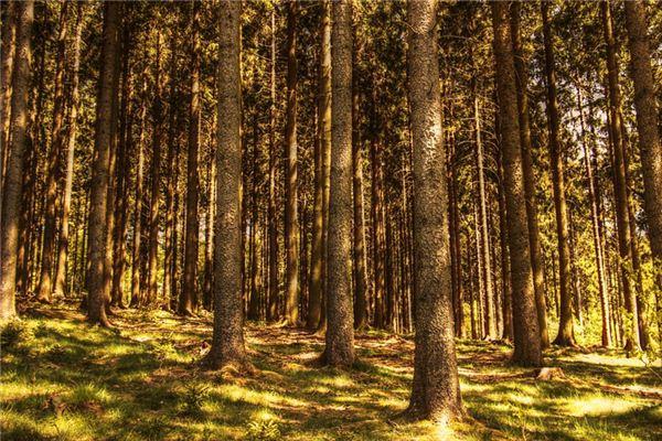 梦见斩树木是什么意思