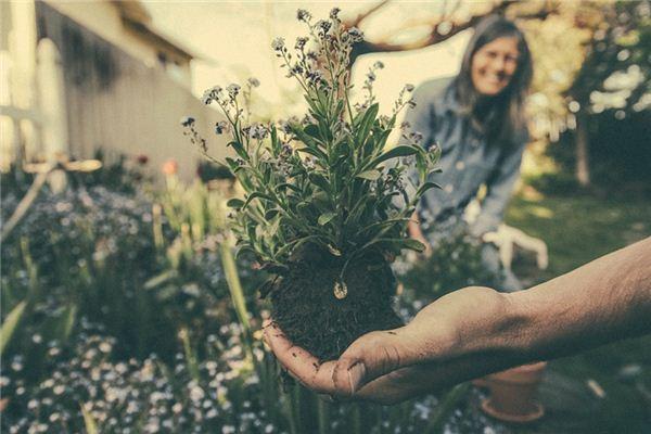 梦见种花是什么意思