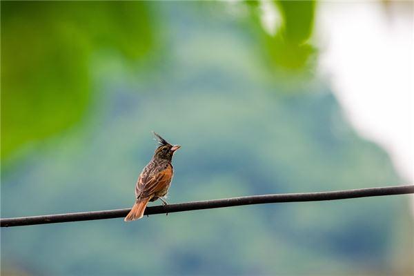 梦见小鸟是什么意思