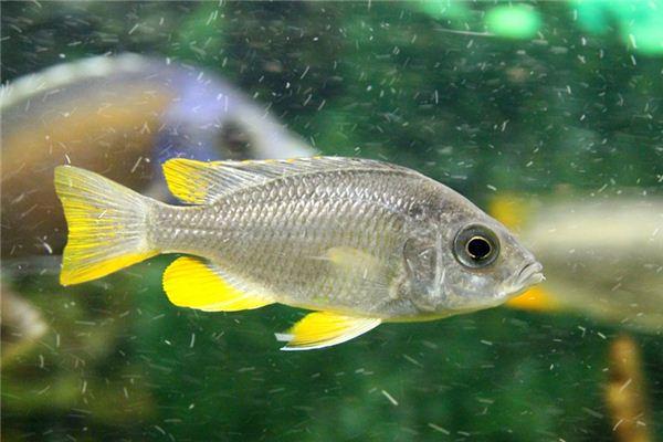 梦见活鱼是什么意思