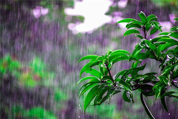 梦见雨水是什么意思