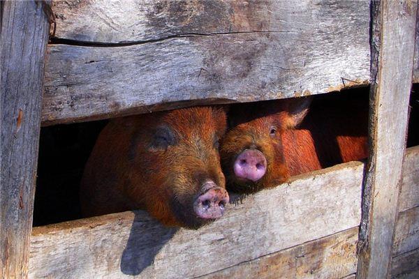 梦见建猪圈是什么意思