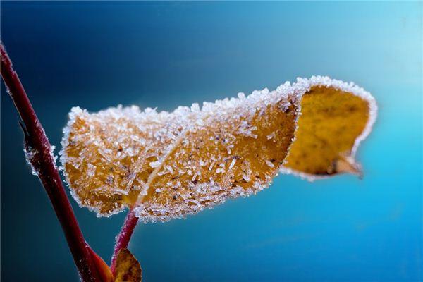 梦见霜降是什么意思