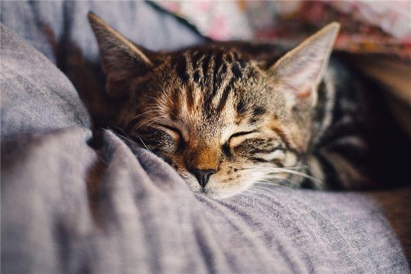 梦见休息是什么意思