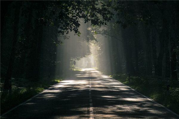 梦见树荫是什么意思