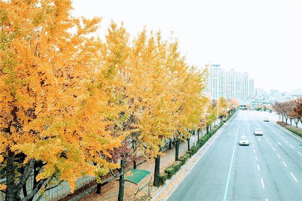 梦见银杏树是什么意思