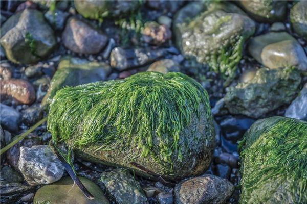 梦见海草是什么意思