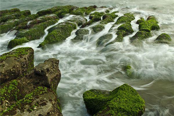 梦见水藻是什么意思