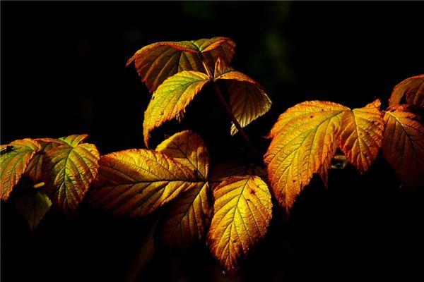 梦见金树叶是什么意思