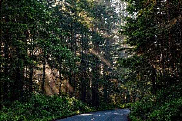 梦见红杉树是什么意思