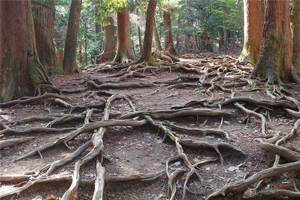 梦见树根是什么意思
