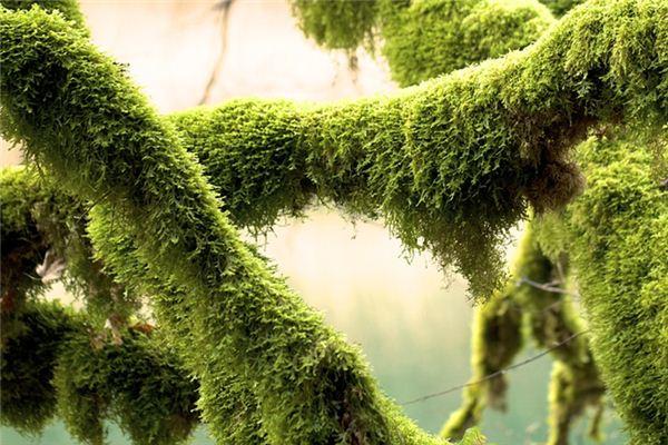 梦见苔藓是什么意思