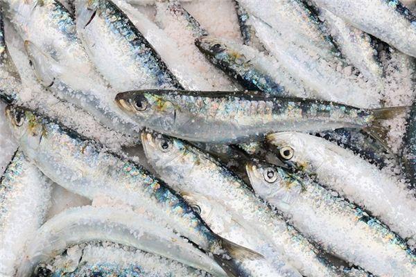 梦见沙丁鱼是什么意思